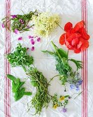I fiori e le erbe selvatiche nei boschi di Como